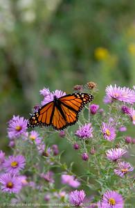 015-butterfly-wdsm-20sep08-0934