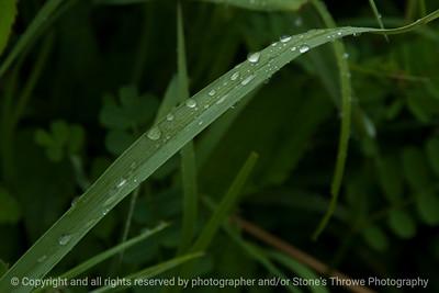 015-grass_blade-wdsm-24may16-18x12-003-9345