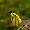 015-flower-wdsm-24jul16-12x18-004-4905
