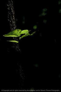 015-leaves-wdsm-15jun17-08x12-007-3237