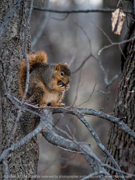 015-squirrel-wdsm-29nov14-09x12-001-0920