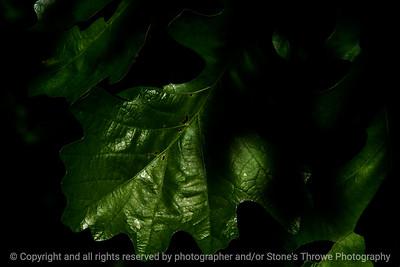 015-leaf-wdsm-25may17-18x12-003-3000