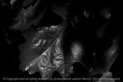 015-leaf-wdsm-25may17-18x12-003-bw-3000