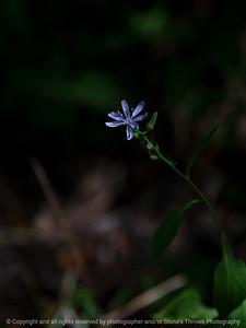 015-flower-wdsm-03aug18-09x12-001-350-6366