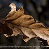 015-leaf_autumn-wdsm-23nov17-12x06-0C7-2773