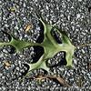 015-leaf-wdsm-16oct17-12x09-002-2257