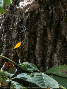 spider_web-wdsm-27sep15-09x12-001-5334
