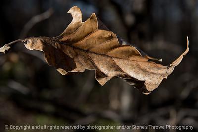 015-leaf_autumn-wdsm-23nov17-12x08-007-2773