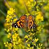 015-butterfly-wdsm-05sep17-08x12-007-1385