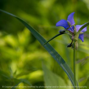 015-flower-wdsm-05jun18-09x09-006-300-5361
