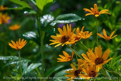 015-flower-wdsm-16jul20-12x08-008-400-7286