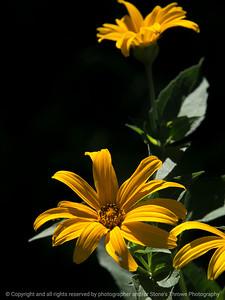015-wildflower-wdsm-14jul17-09x12-001-0241