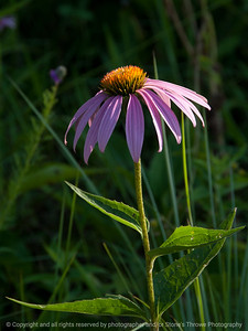 015-flower-wdsm-06jul16-09x12-001-0129