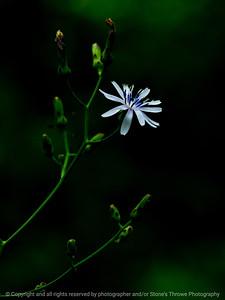 015-wildflower-wdsm-28jul17-09x12-001-0340