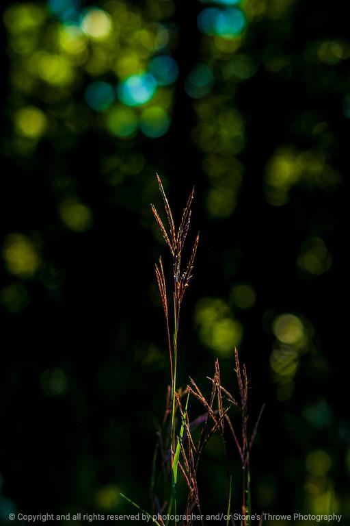 015-grass-wdsm-16sep14-12x18-9706