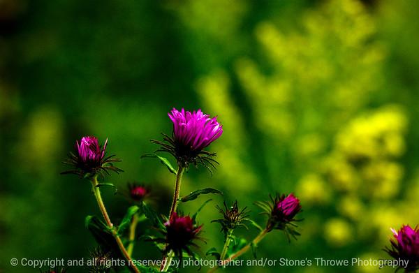 015-flower-wdsm-04sep08-0835