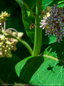 015-insect_bee_fly-wdsm-21jun21-09x12-001-400-2684