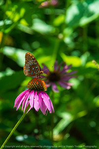 015-butterfly-wdsm-07aug20-08x12-008-400-7514
