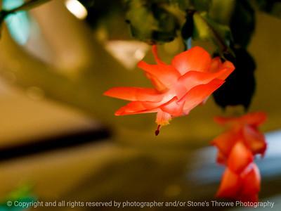 015-cactus_flower-wdsm-10mar10-8991