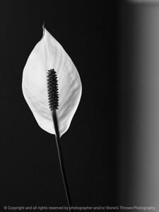 015-botanical-wdsm-22feb10-8536