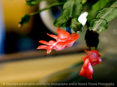 015-cactus_flower-wdsm-10mar10-8980