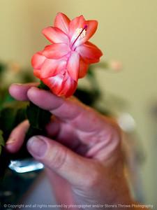 015-cactus_flower-wdsm-25feb10-8547
