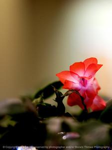 015-cactus_flower-wdsm-10mar10-8977