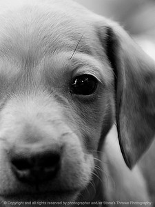 015-dog-urbandale-20jul13-022-bw-2597