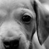 015-dog-urbandale-20jul13-022-bw-2597