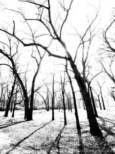 015-tree-wdsm-01nov12-bw-201-8920