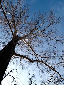 Places - Walnut Woods