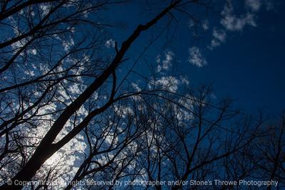015-tree_branches-wdsm-24nov17-12x08-007-2825