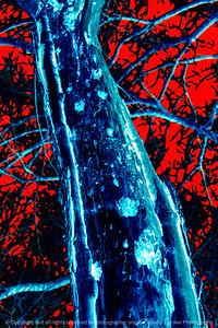 015-tree_trunk-wdsm-24nov17-08x12-208-500-2915