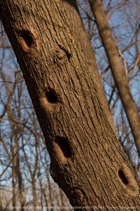 015-tree_detail-wdsm-24nov17-08x12-008-500-2907