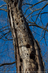 015-tree_trunk-wdsm-24nov17-08x12-008-500-2915