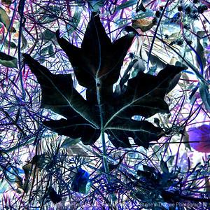 015-leaf-wdsm-24nov17-09x09-206-350-2927