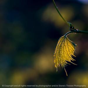 015-leaf-wdsm-09x09-006-350-5259