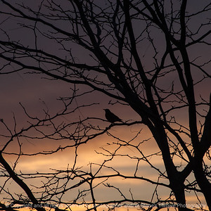 015-sunrise_silhouette-wdsm-01nov16-12x12-006-2074