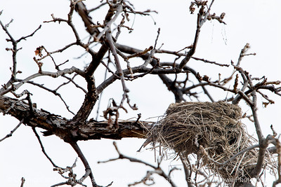 015-bird_nest-wdsm-11feb17-18x12-003-7676