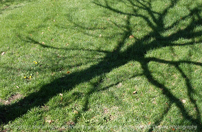 015-shadow_on_grass-wdsm-14apr05-6972