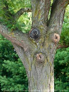 015-tree-wdsm-08jul16-09x12-001-0212
