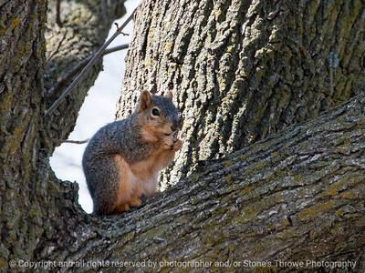 015-squirrel-wdsm-27mar15-12x09-002-2292