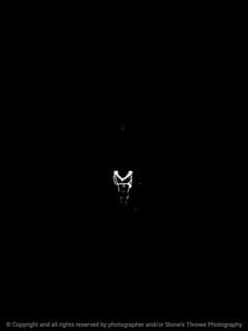 015-light_bulb-wdsm-09jul16-12x16-001-bw-4702