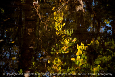 015-reflections_leaves-wdsm-26oct14-18x12-003-0367