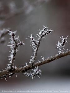 frost-wdsm-25dec15-09x12-001-6264