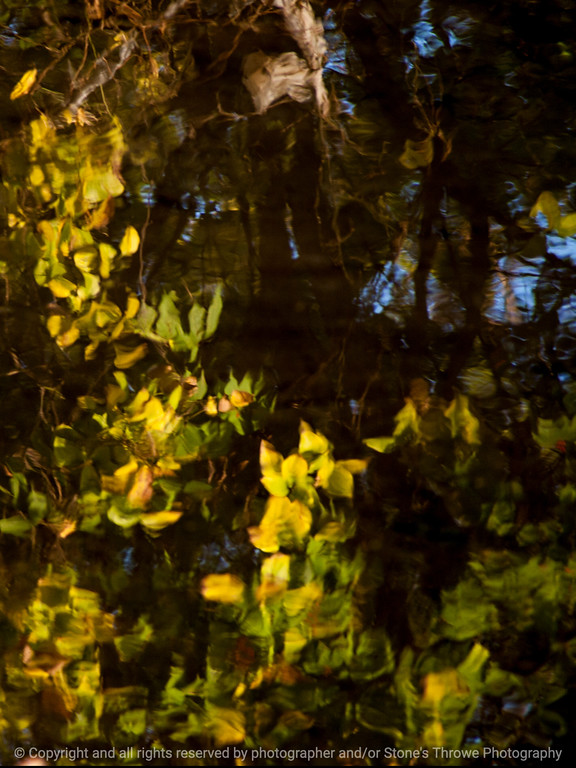 015-reflections_leaves-wdsm-26oct14-09x12-001-0367