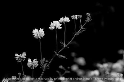 015-botanical-wdsm-26may12-003-bw-6304