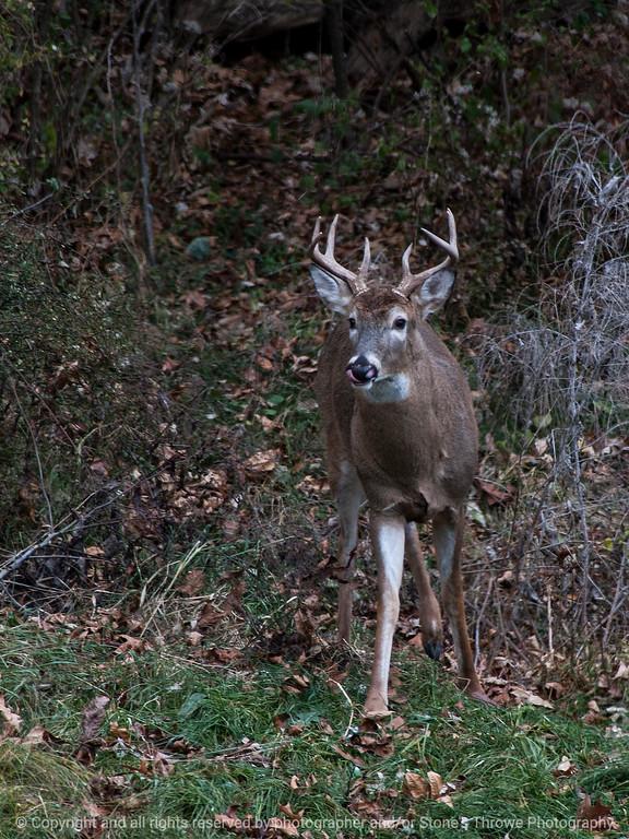 015-deer-wdsm-13nov14-09x12-001-0662