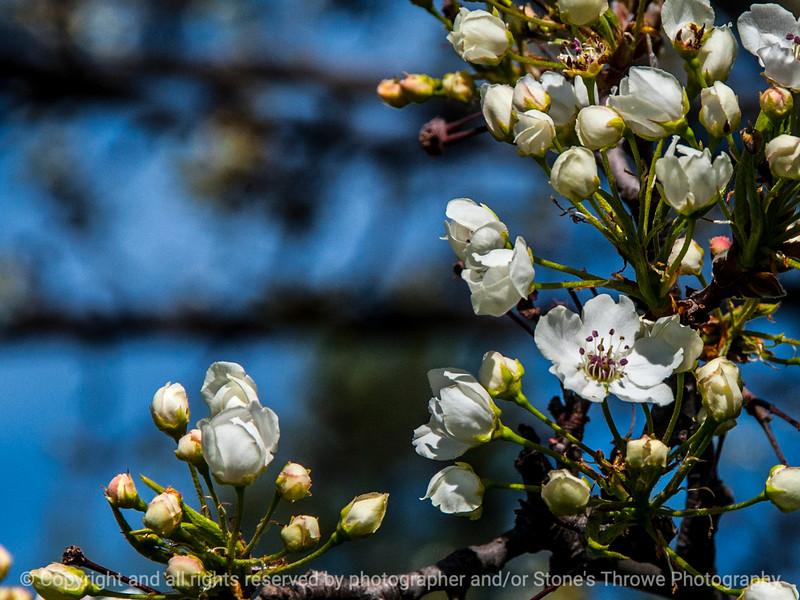 015-flower-wdsm-25apr14-002-7180