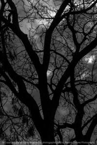 015-tree-wdsm-25oct16-12x18-004-bw-1972